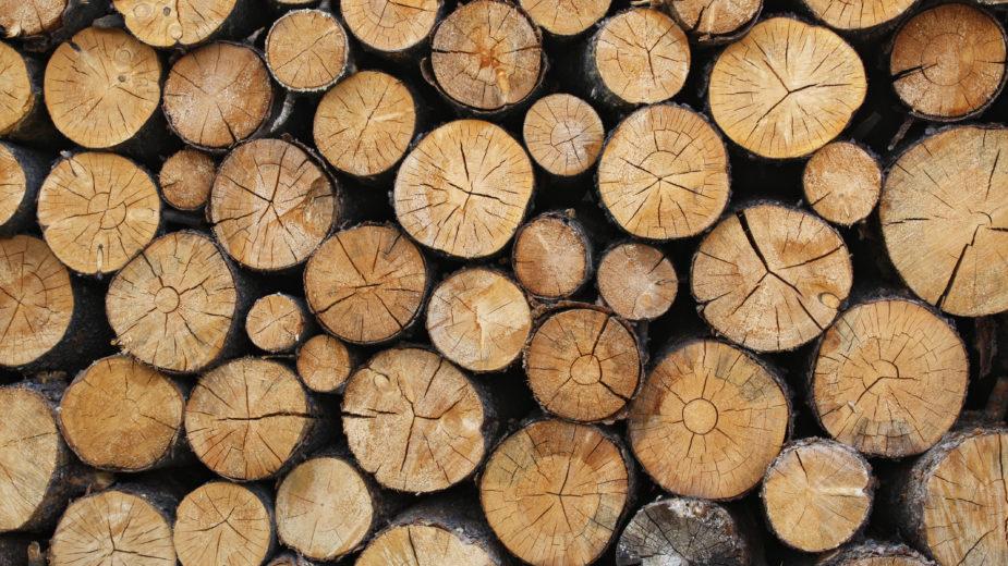 Metsa ülestöötamine