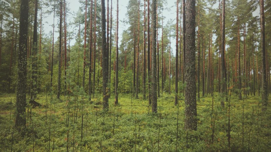 Purchase of forest properties